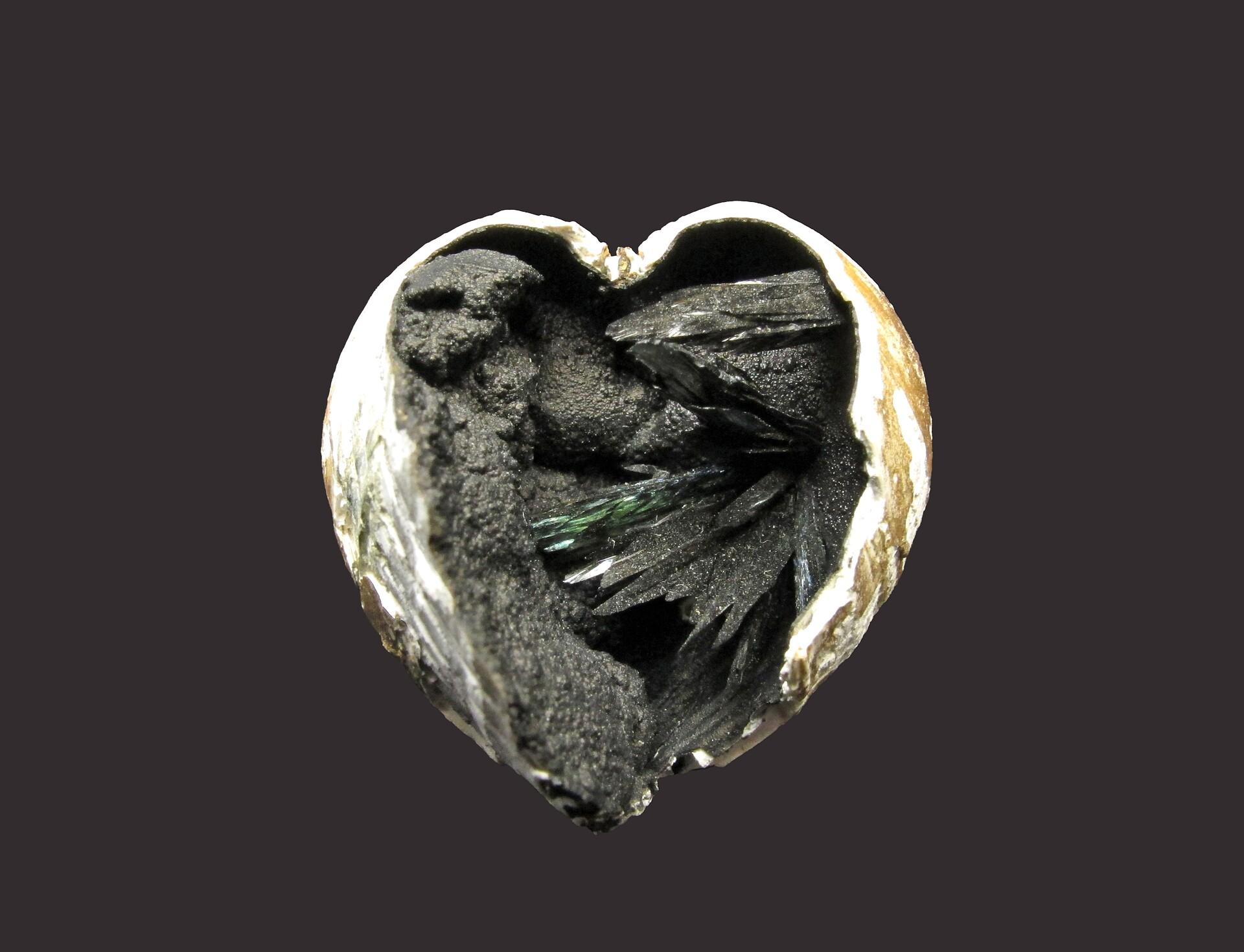 Vivianite in fossil clam shell | Kerch peninsula, Crimea peninsula