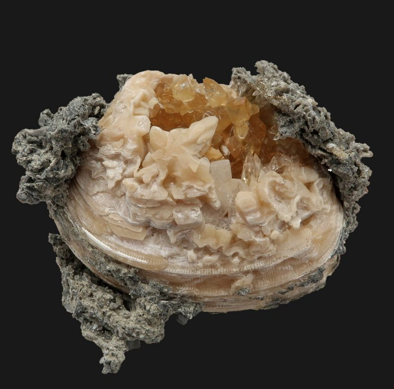 Calcite (fluorescent) in fossil clam shell
