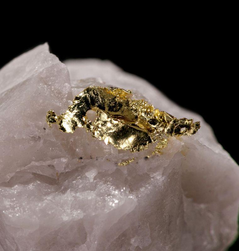 Gold in Quartz (Chet Lemanski Coll.)